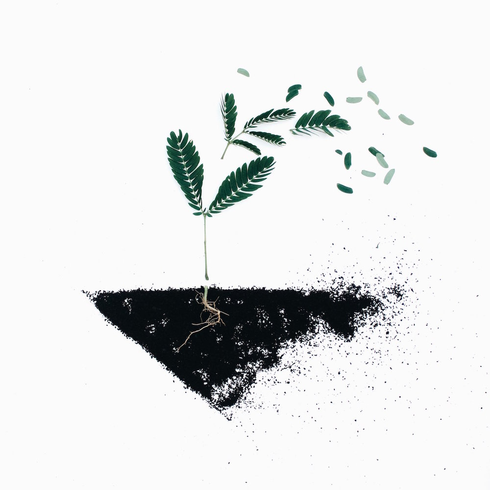 Green plant with soil and roots graphic.jpg
