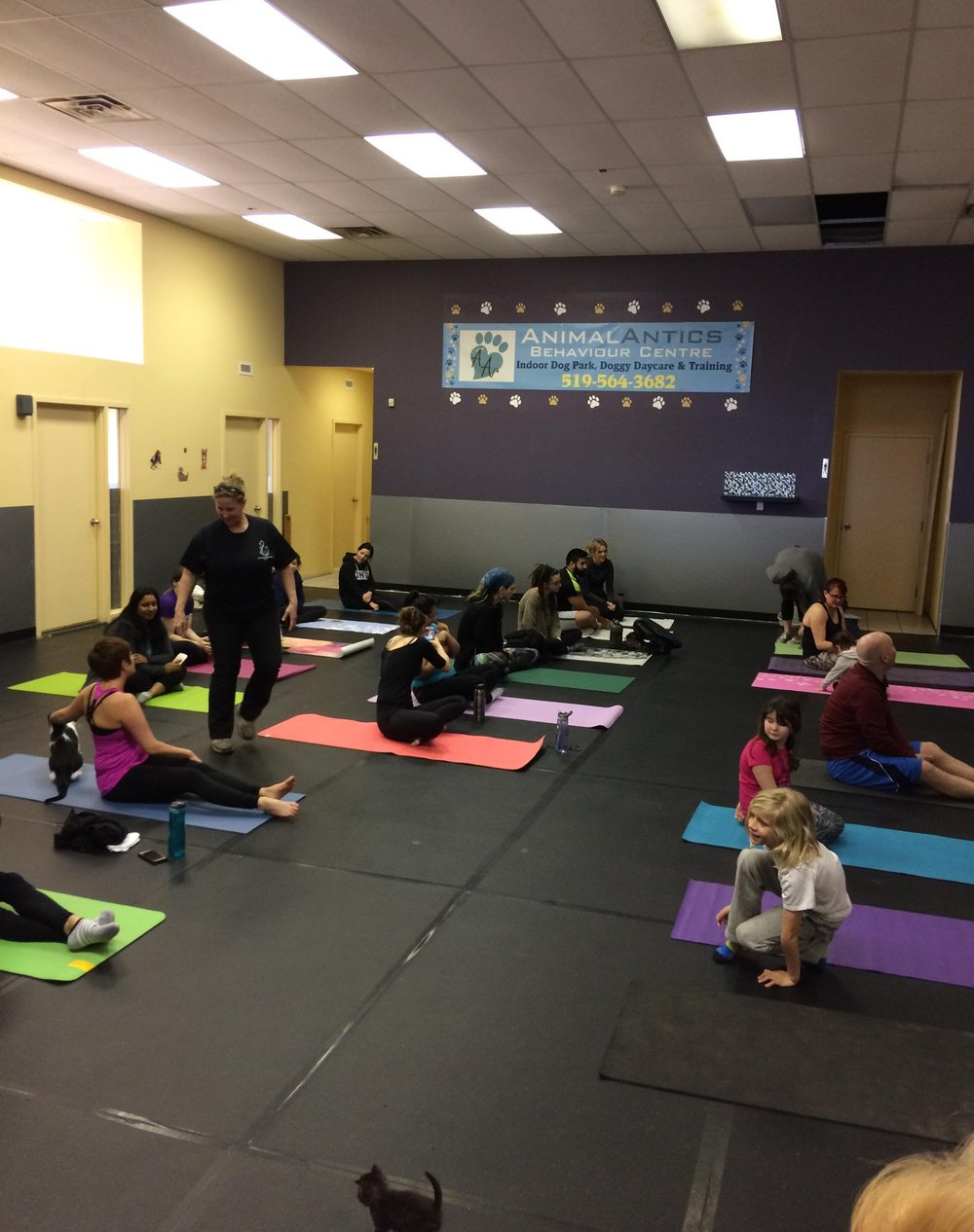 Kitty and Bunny Yoga - Hosted by CARA and Tiny Paws