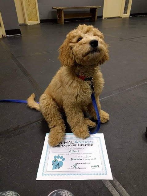 Puppy Socialization and Obedience Class -