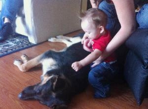 Samson bonding with one of Sharon and Rick's grandsons. -