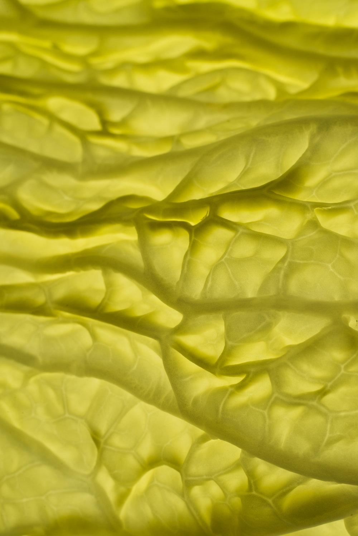patterncomida1318.jpg