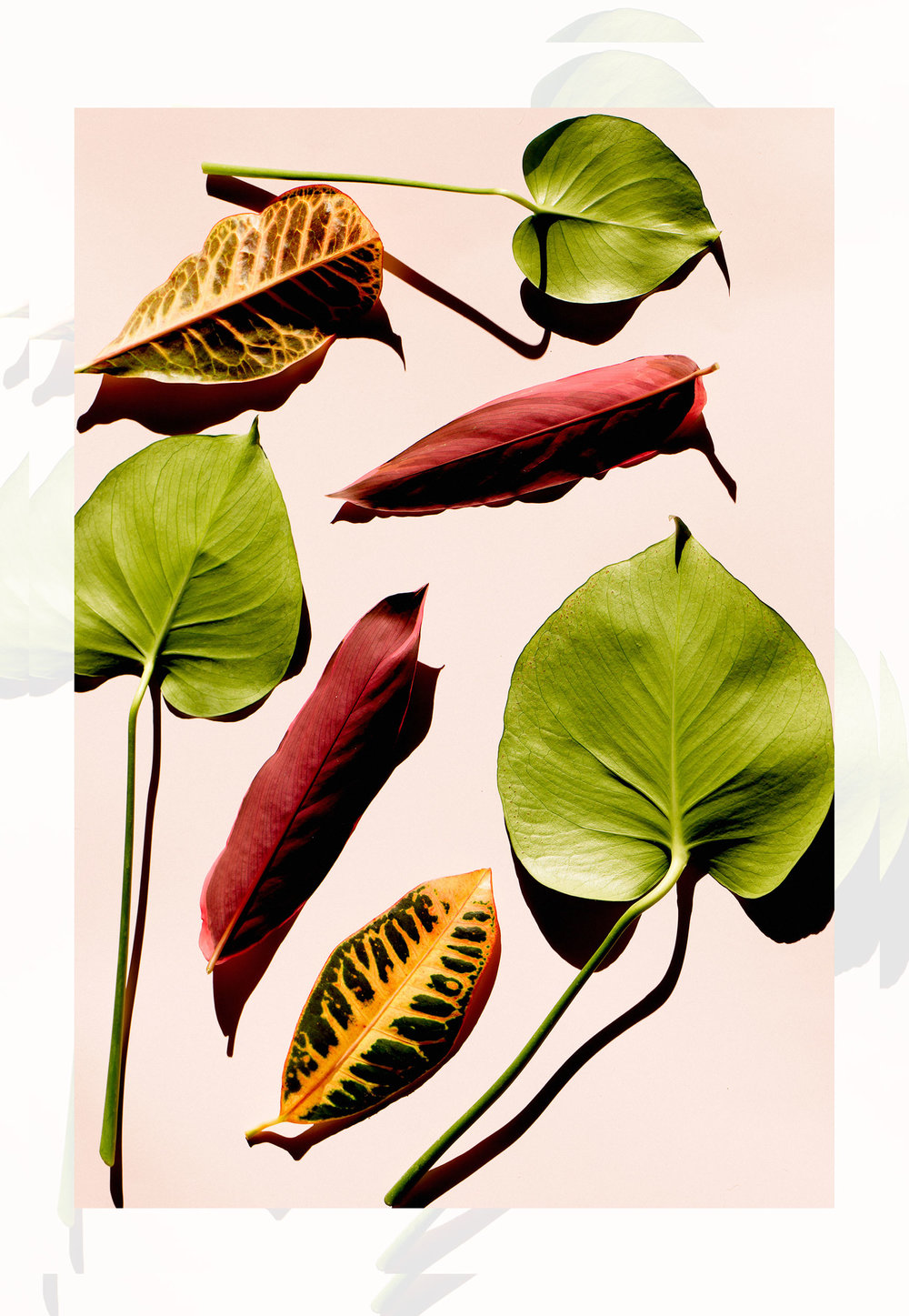 portada fotografo director de arte flores pastel barcelona professional diseñador leandro crespi.jpg