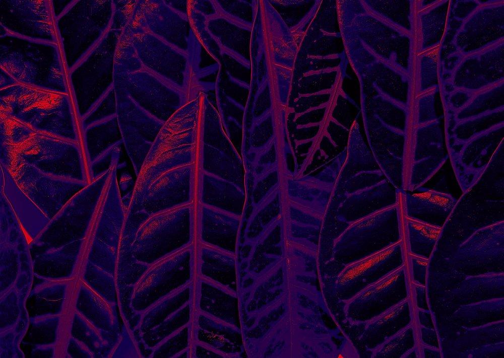 Ultraviolet forest