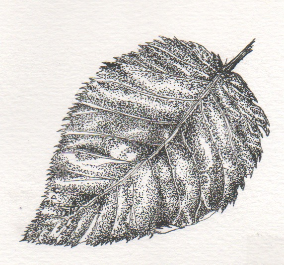 Stippled Leaf