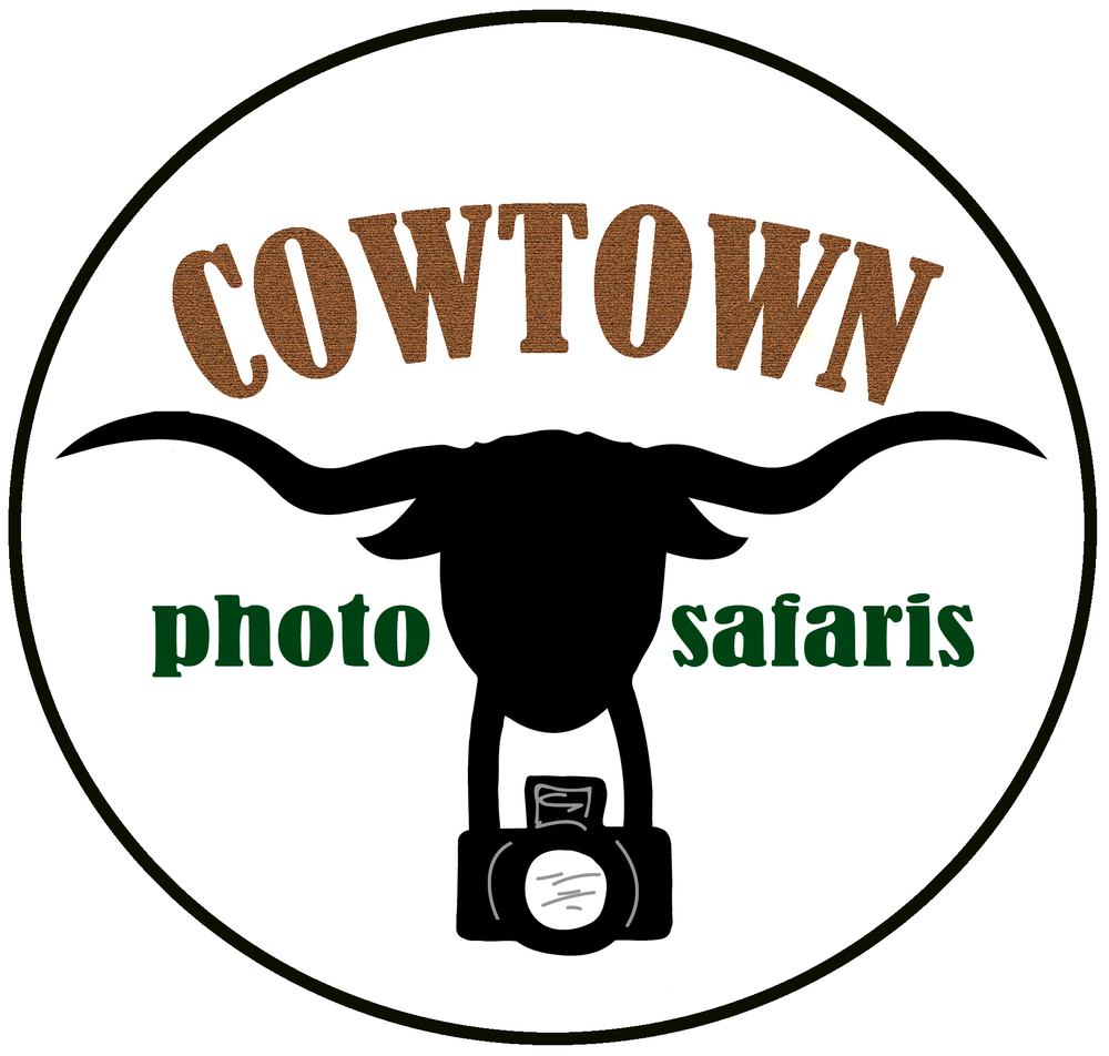 Cowtown Photo Safaris