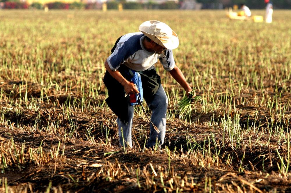 ProducePay raises $77 million to revolutionize farm financing