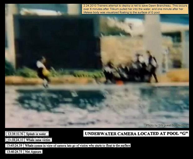 Image courtesy: Voice of the Orcas. This authentic but blurry image of the rescue attempt to deploy the net and aid Dawn was taken from the timeline of the camera at G Pool. Dawn's body was noted as lifeless at 7 minutes, with the 911 call still around 19 minutes from being forwarded to the Sheriff's office.