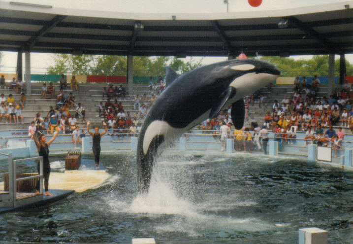 Lolita has been in the same-sized tank since she first arrived at Miami Seaquarium. By No machine-readable author provided.  Belissarius  assumed (based on copyright claims). - No machine-readable source provided. Own work assumed (based on copyright claims)., CC BY-SA 3.0.