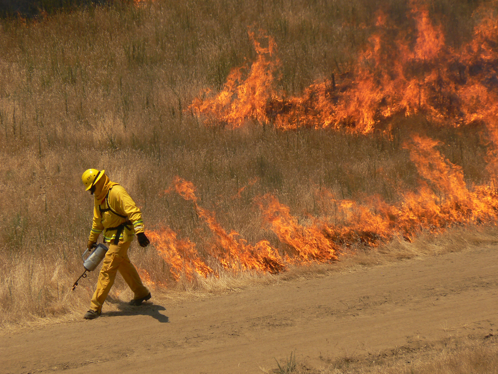 Prescribed burns in Murphy Meadow are set by the East Bay Regional Park District to prevent wildfires from spreading out of control.