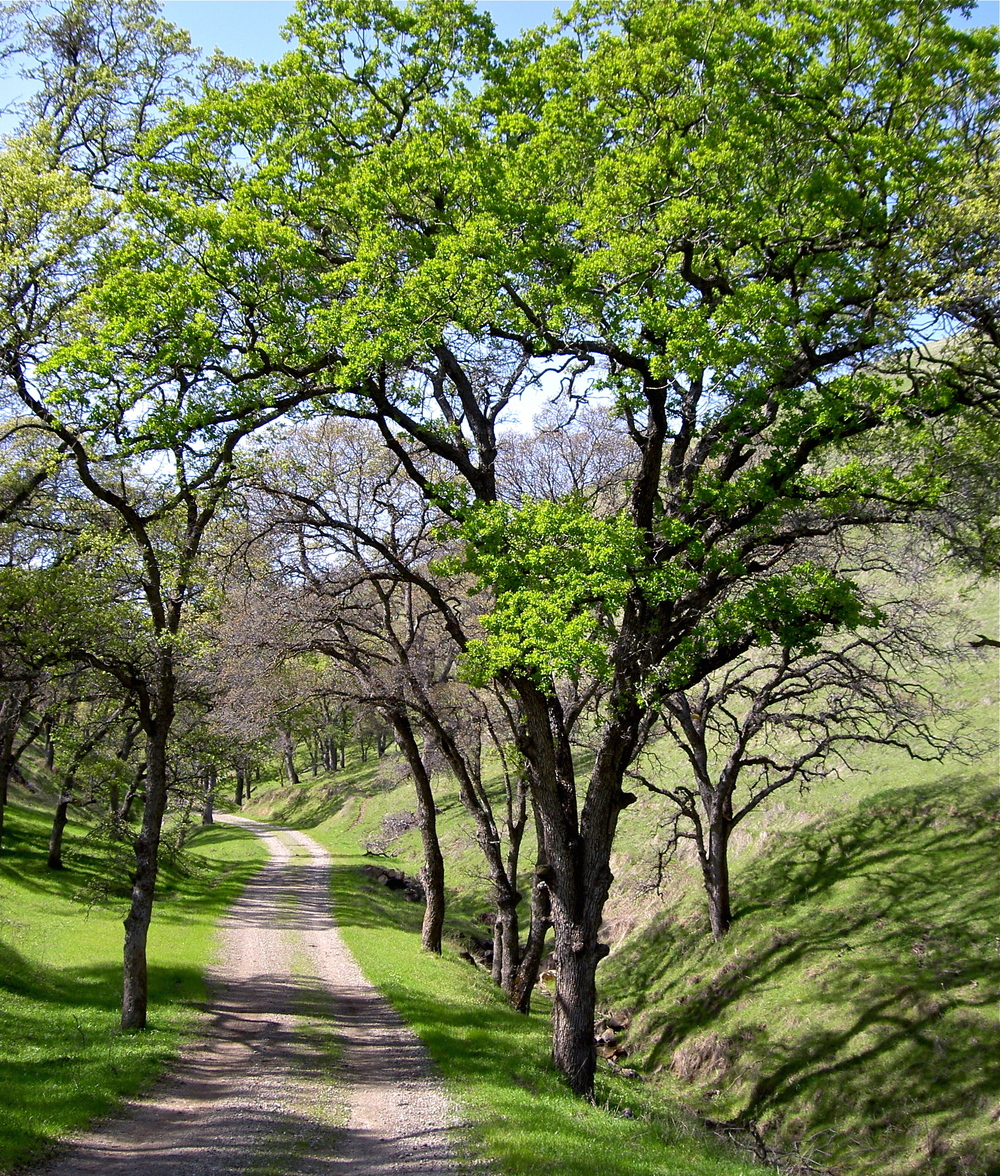 Mariposa Canyon in spring.