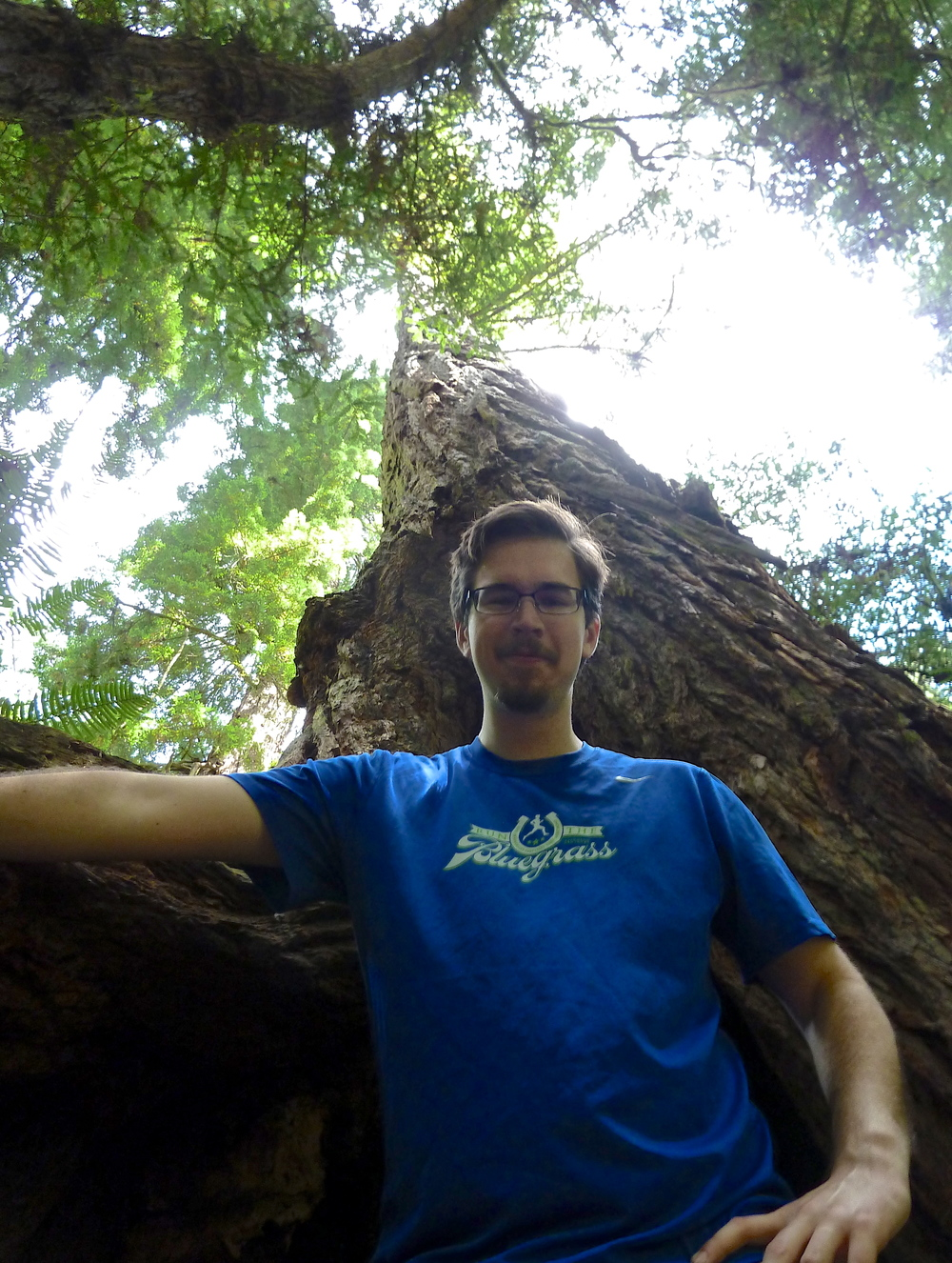 Chris Erickson gets rooted beneath a coast redwood on the Steep Ravine Trail, Mt. Tamalpais State Park.