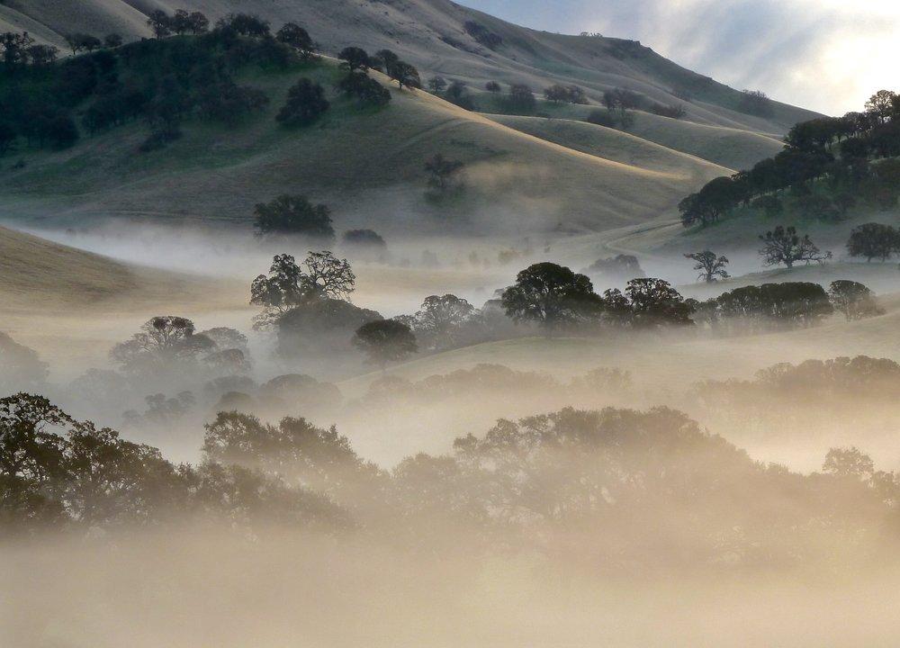 Early-winter fog drifts through the hills bracketing the Oak Savannah Trail.