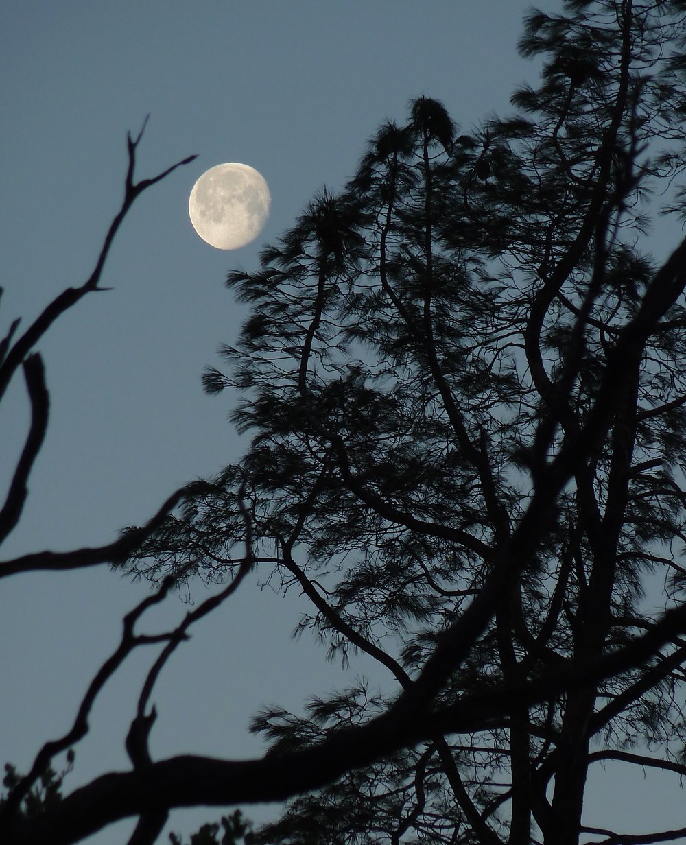 Moon over Murchio Gap, Mt. Diablo State Park.