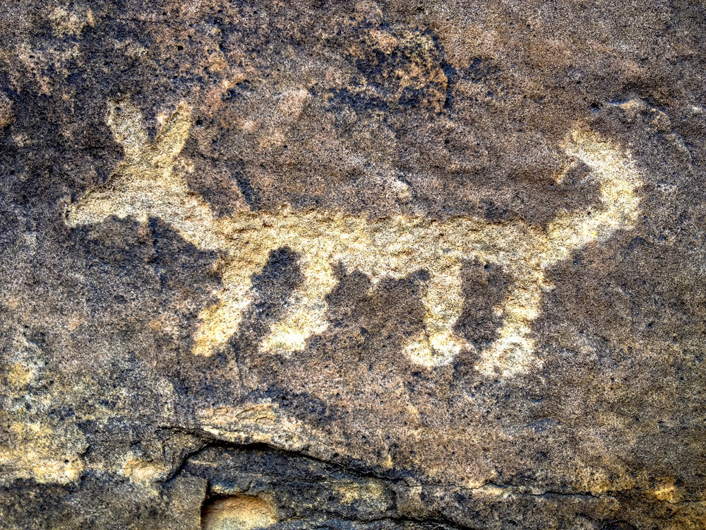 Coyote pictograph by CampPhoto/iStock/Getty Images