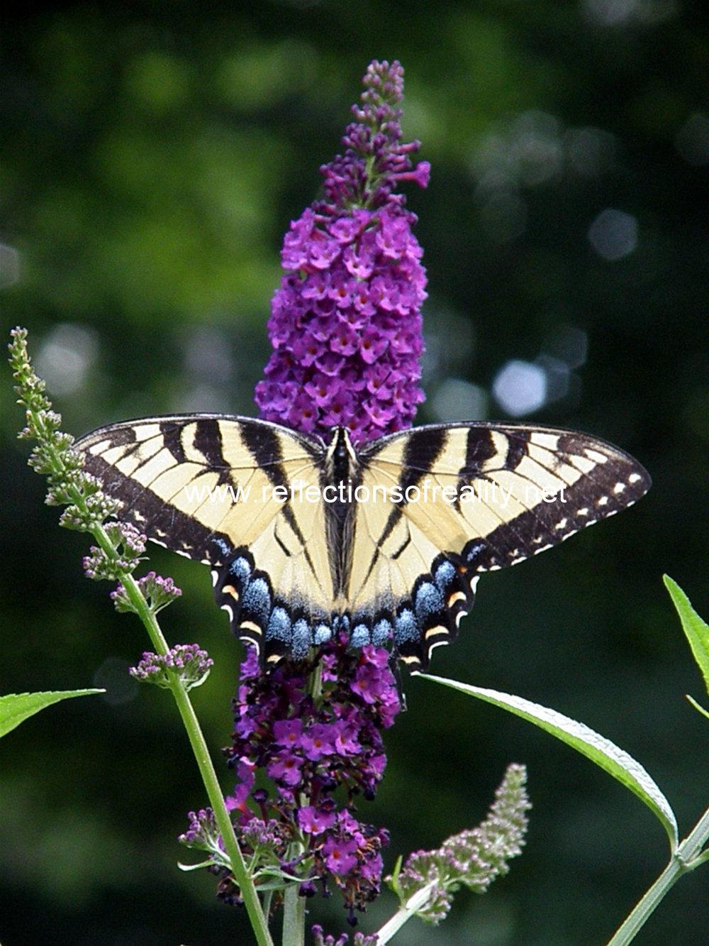 flutterby watermark.jpg
