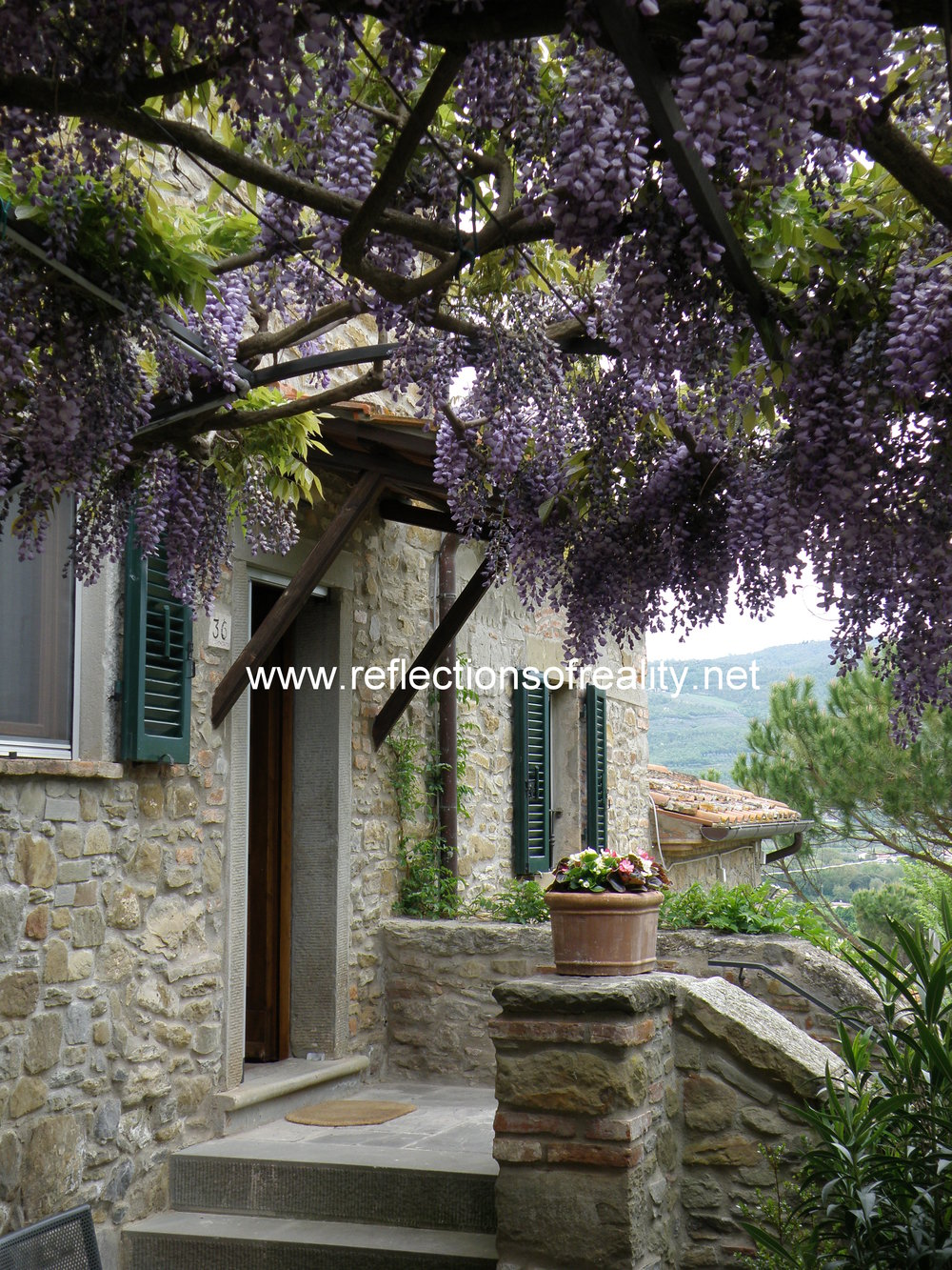 wisteria watermark.jpg