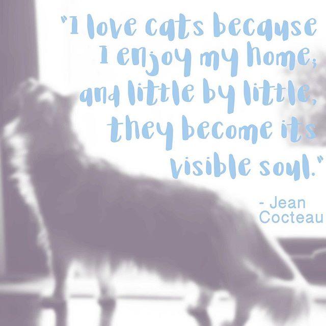 #truth . . . . #instacat #instaquote #instaquotes #catlife #jeancocteau #quoteoftheday #petlove