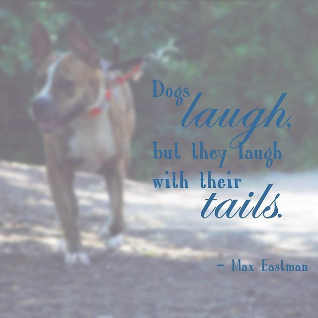 One of the best parts of my job is seeing the different senses of humor dogs have. They're every bit as varied and hilarious as humans, and I love every second! 💗
