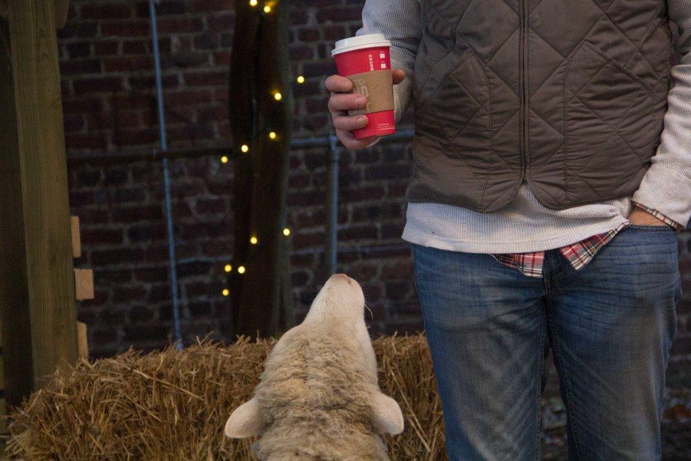 Sheep and Starbucks