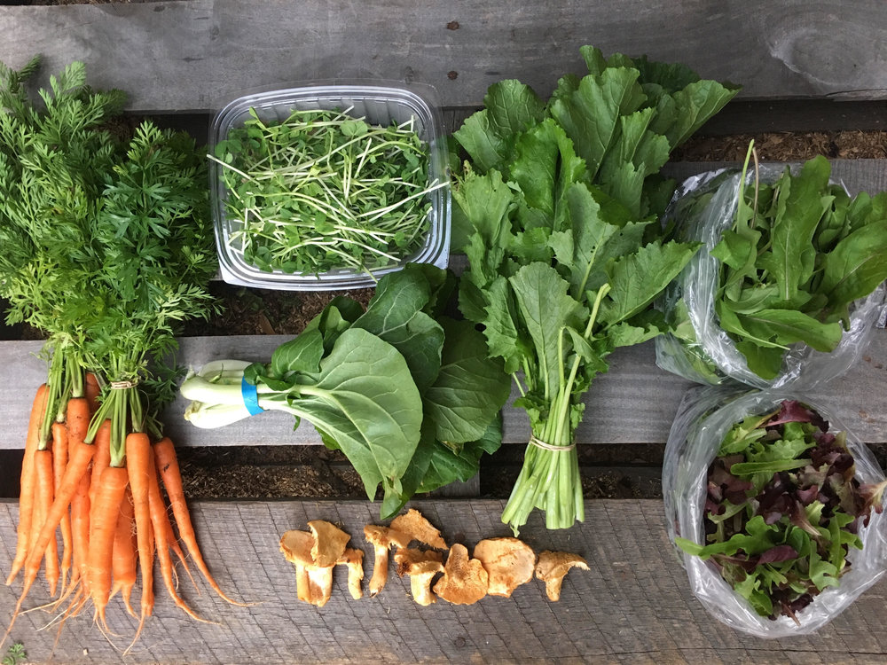 CSA BOX #15 - CARROTS, PAC CHOI, BROCCOLI RAAB, PEA SHOOTS, SPRING MIX, ARUGULA, HEDGEHOG MUSHROOMS