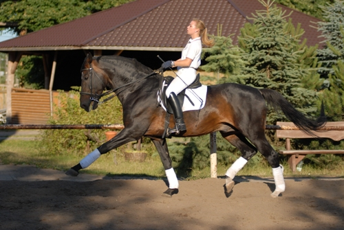 Training with Nabucco - my trainer's Grand Prix stallion
