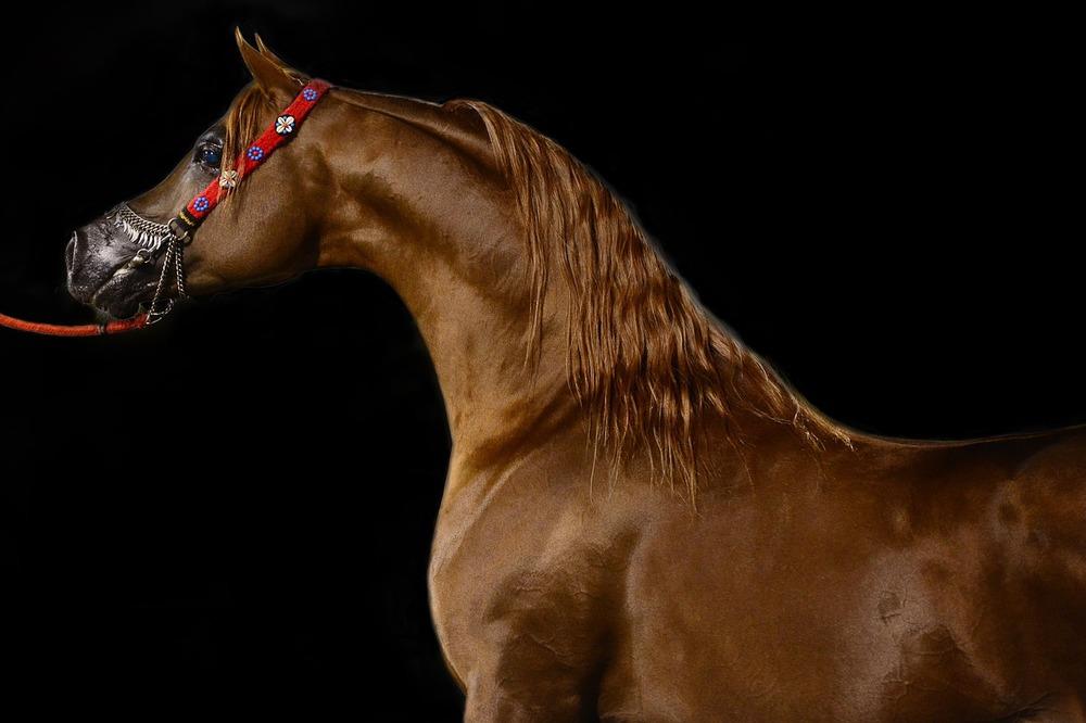horse-678734_1280.jpg