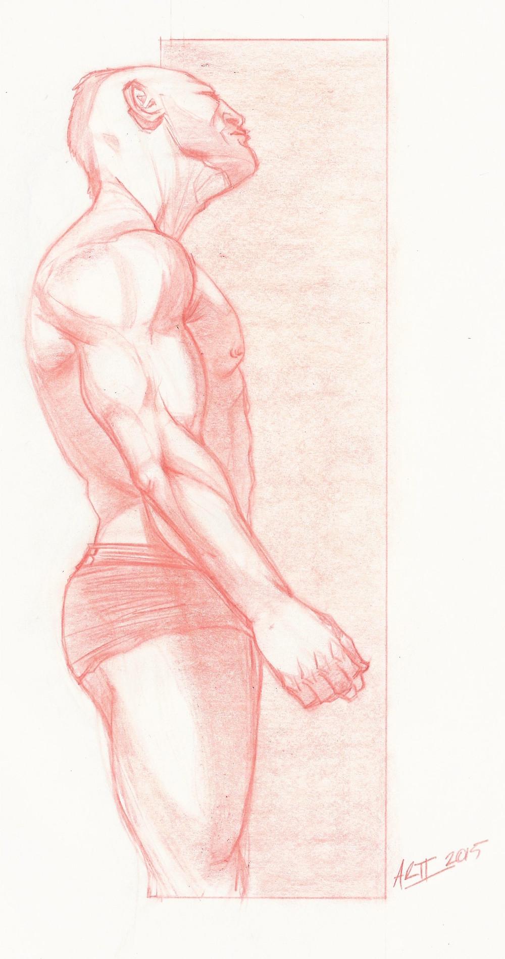 male_anatomy.jpeg