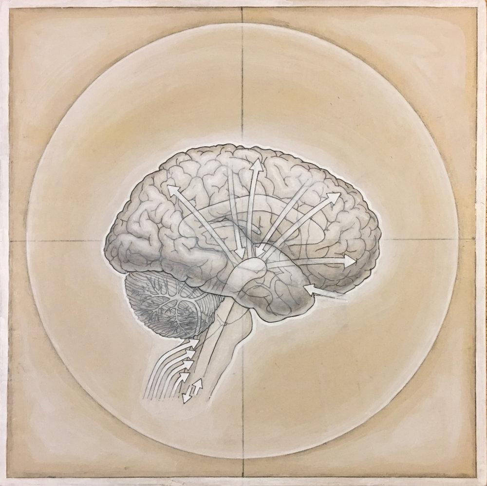 HumanBrain(process-4).jpg