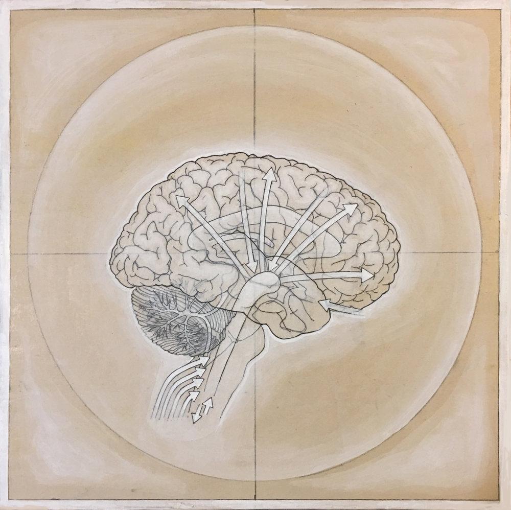 HumanBrain(process-3).jpg