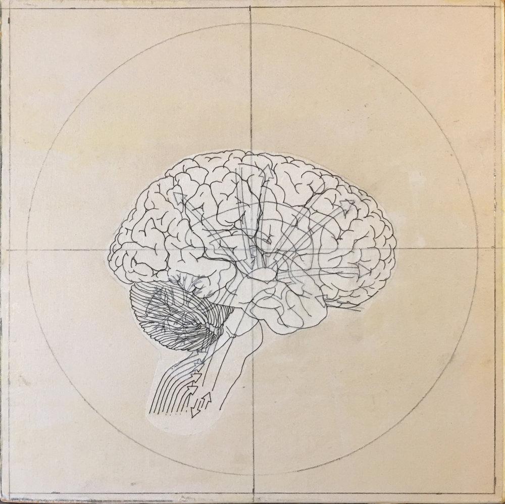 HumanBrain(process-2).jpg