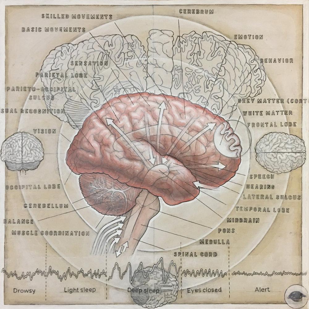 HumanBrain(process-7).jpg