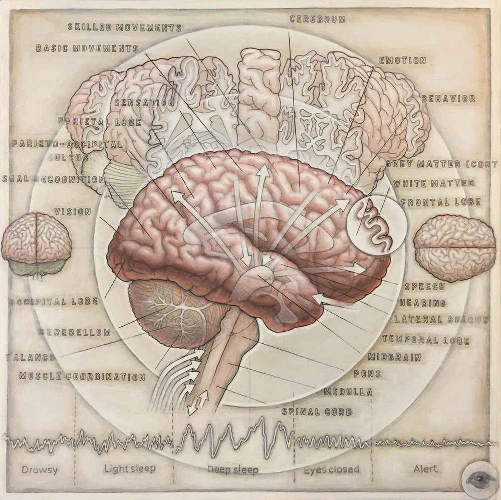 HumanBrain(v-1-1).jpg