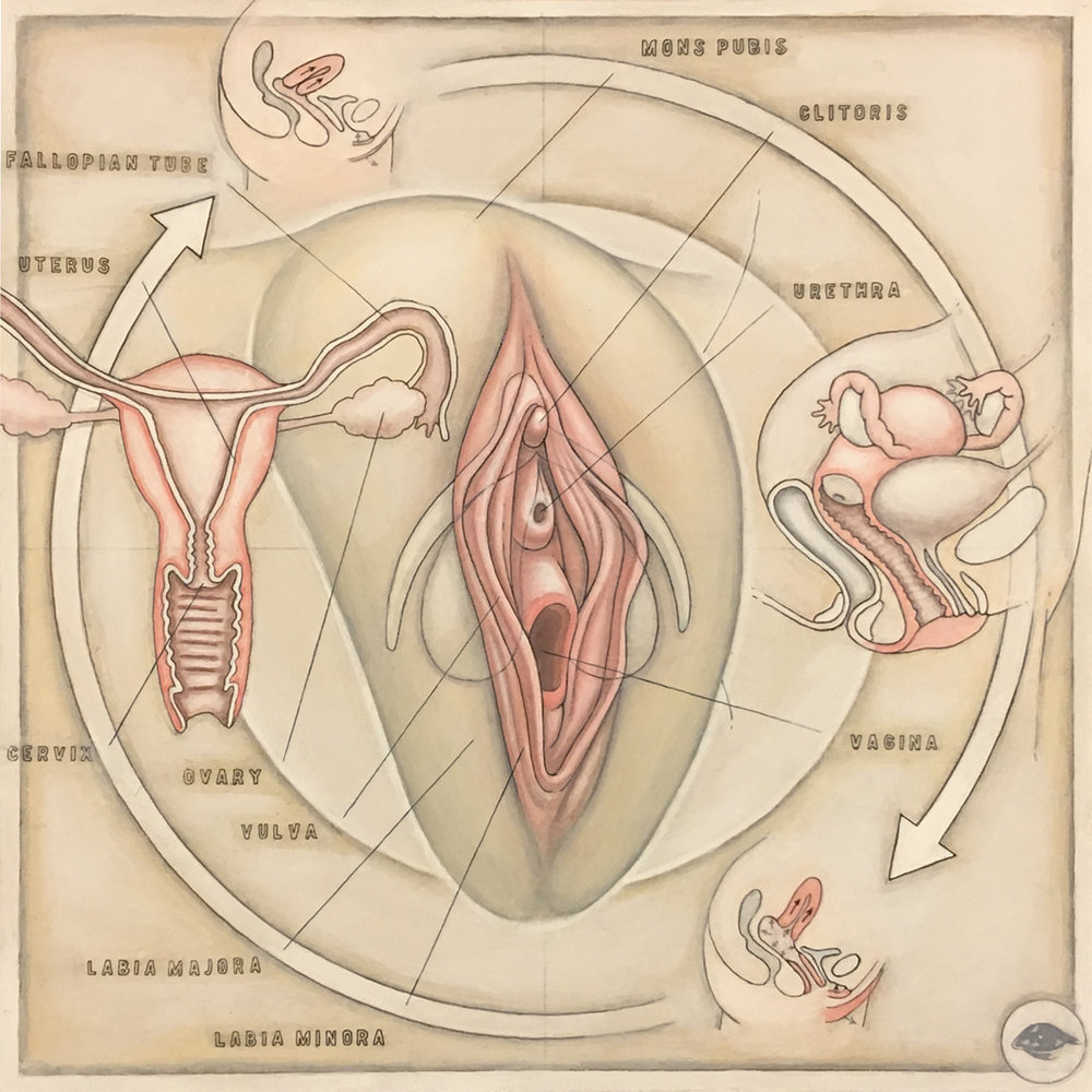 Human Reproductive (Female) (v.1.1)