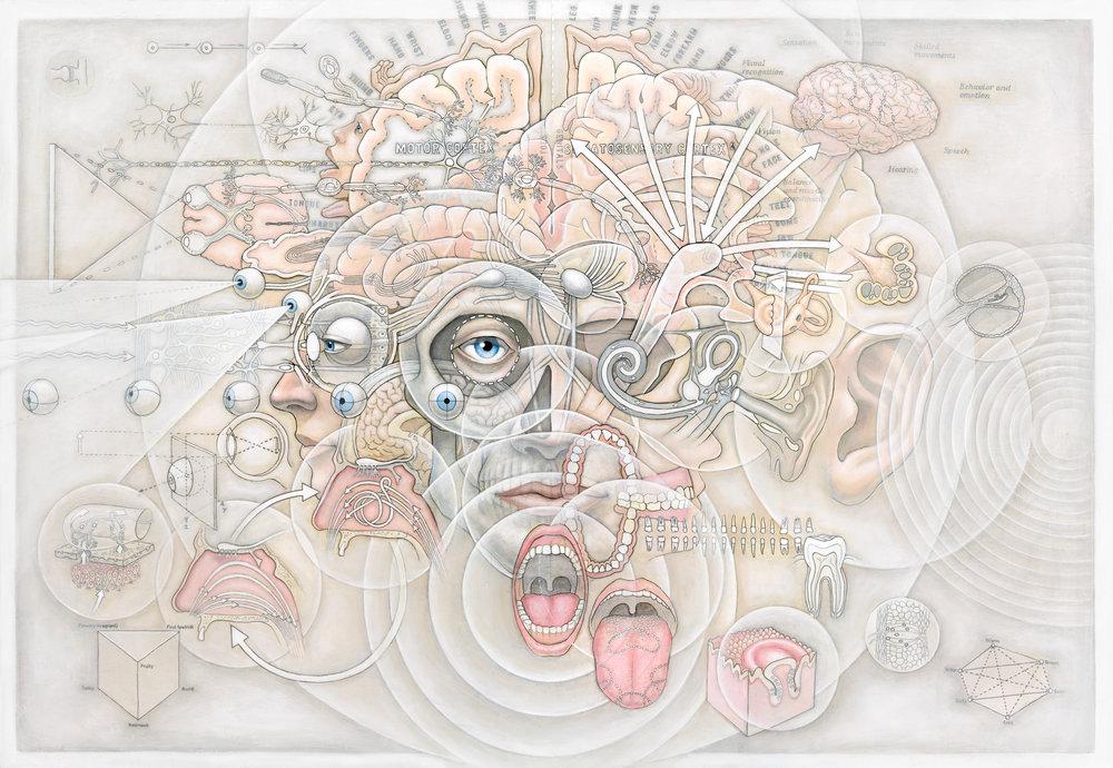 human-sensorium-v-2-1-casey-cripe.jpg