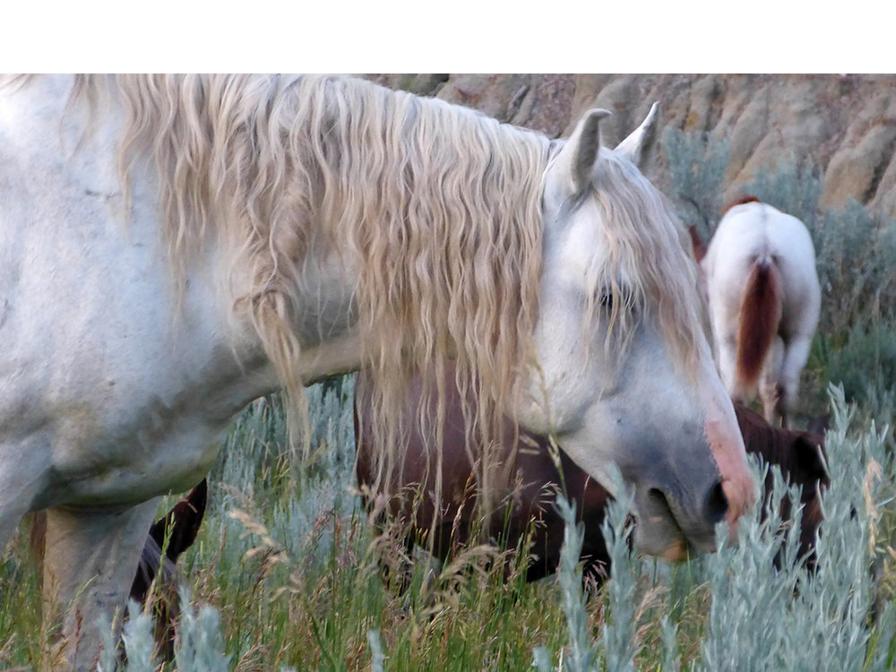 Wild, Wild Horses—Theodore Roosevelt National Park, ND