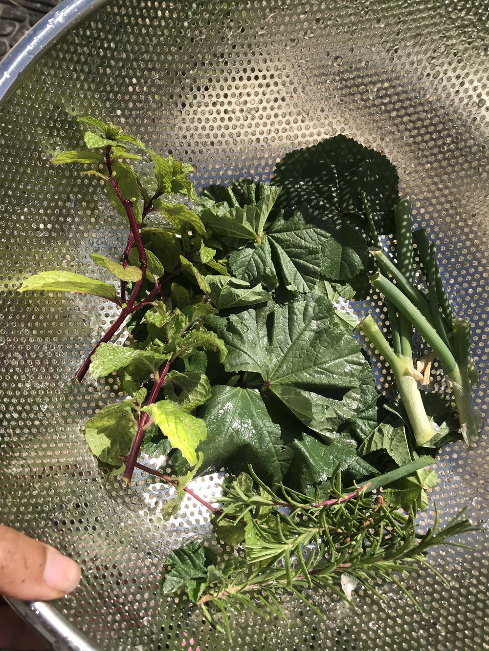 Edible Mallow leaves (a weed) in the mix