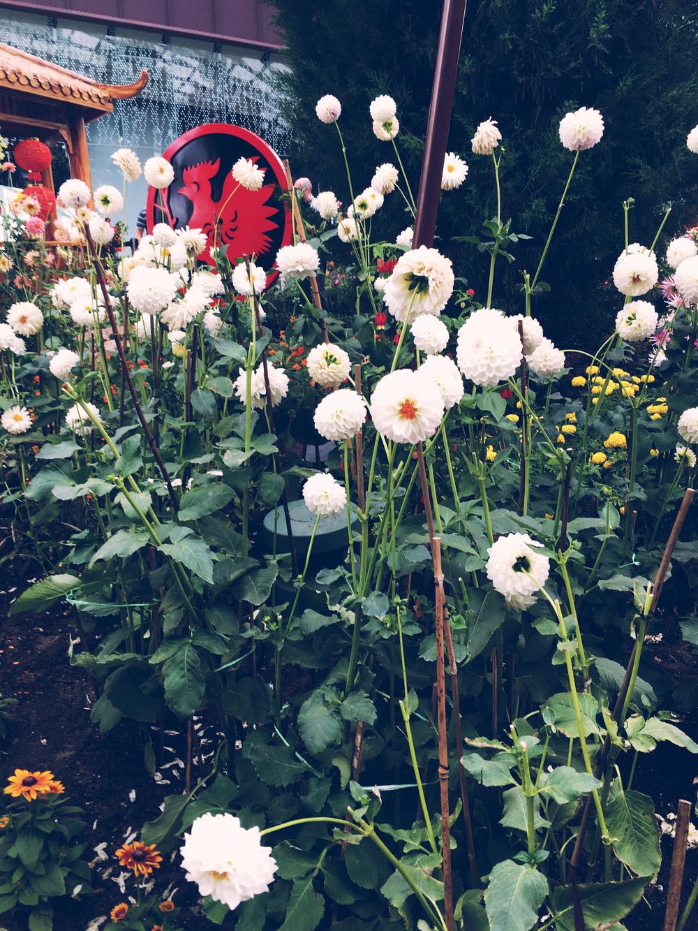 flower dome 2.jpg
