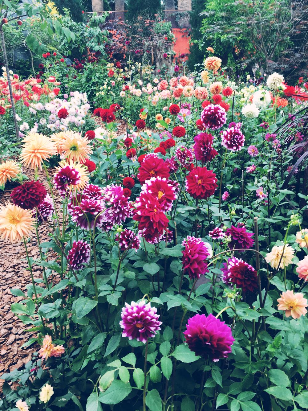 flower dome 1.jpg