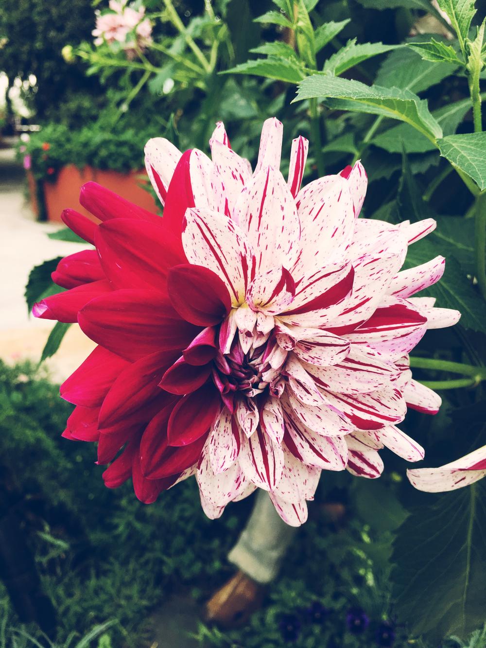 flower dome 3.jpg