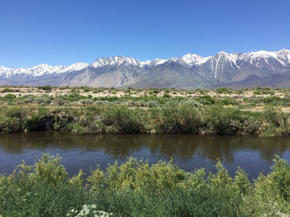 The Lower Owens River -- formally dry due to water diversions -- now runs south through the Owens Valley, CA. We are quantfying the response of birds and butterflies to the reintroduction of water to the river system.