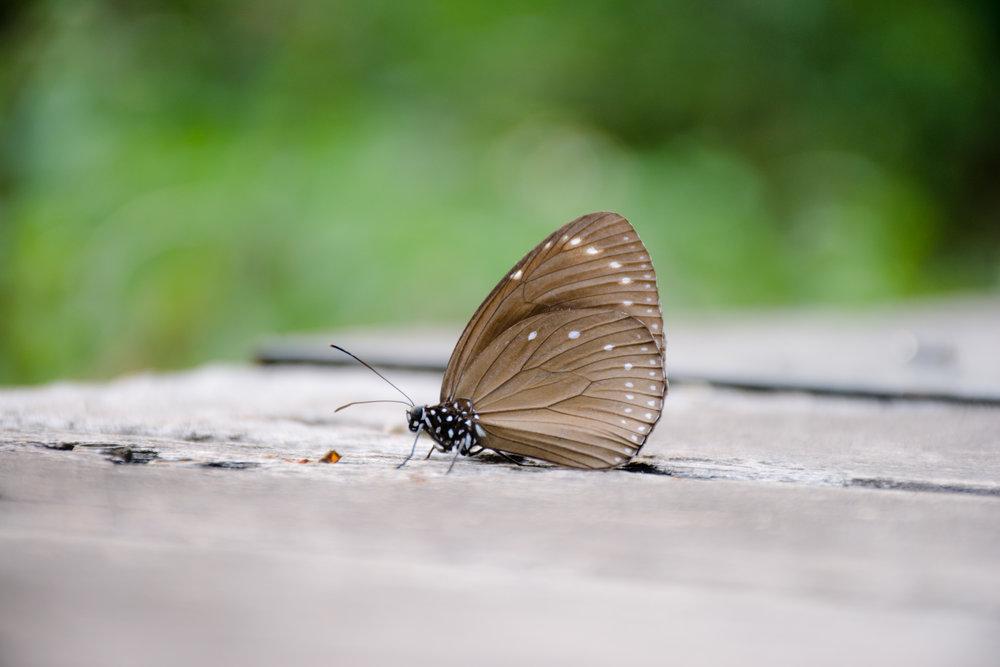 Butterflies surround you in Maolin, Taiwan.