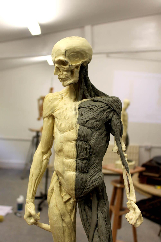 Artistic Anatomyecorche Jason Arkles
