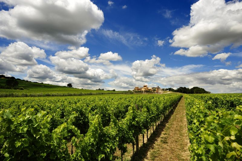 vineyard_clouds.jpg