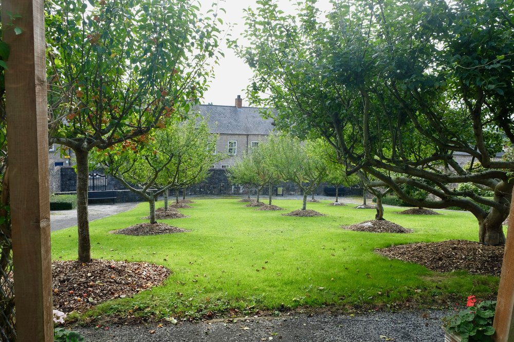County Armagh is apple country, and the cathedral grounds are no exception.