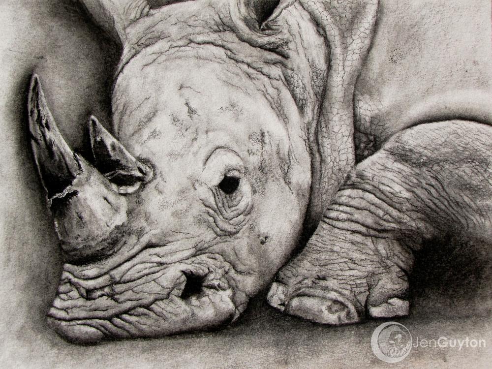 White rhino, Ceratotherium simum. 2009.