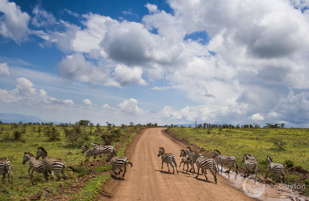 Ngorongoro0055.jpg