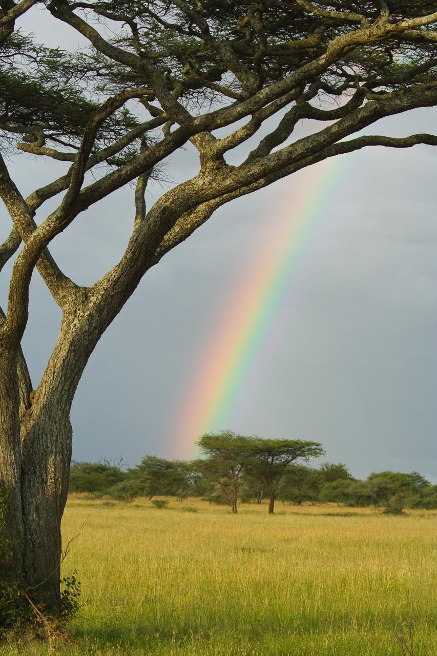 Serengeti0206.jpg