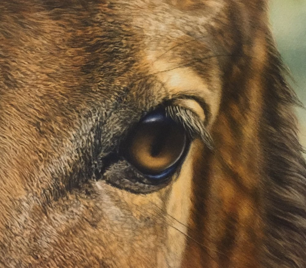 "Karen's ""Mystical Eye"" is remarkably detailed. You can see the individual hairs!"