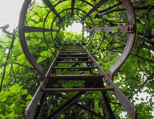 ladder green.jpeg