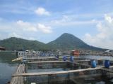 IndonesiaLakeJatiluhur